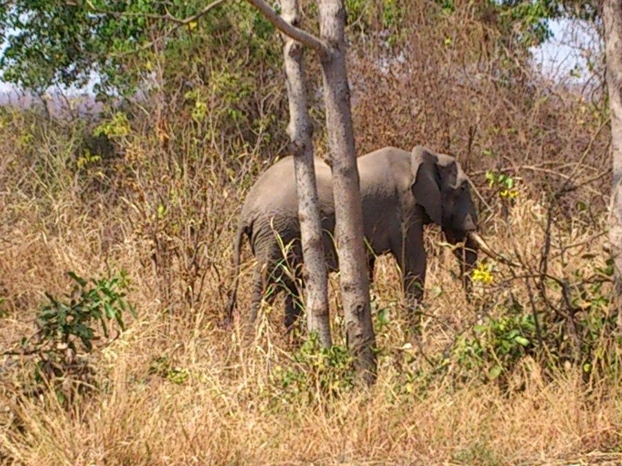 The bachelor elephant boy