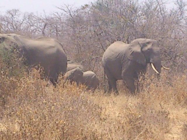 Elephant surrounding us
