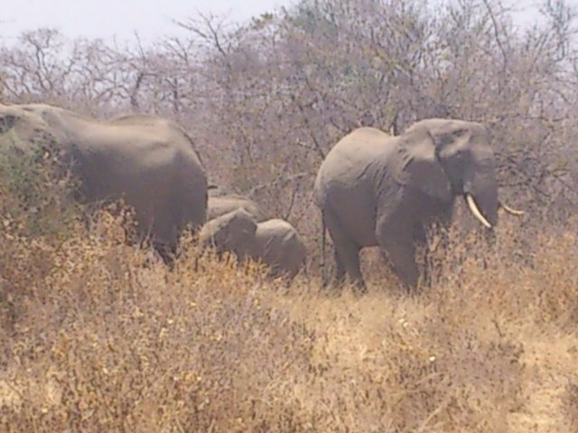 Elephant surrounding us