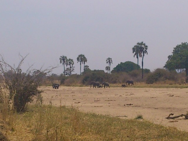 Elephant in Ruaha River