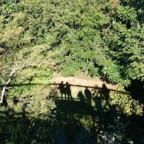 Shadows on Boomslang
